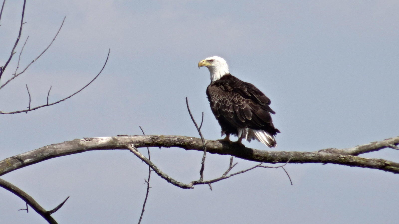 Bald Eagles have occasionally been spotted on the property.
