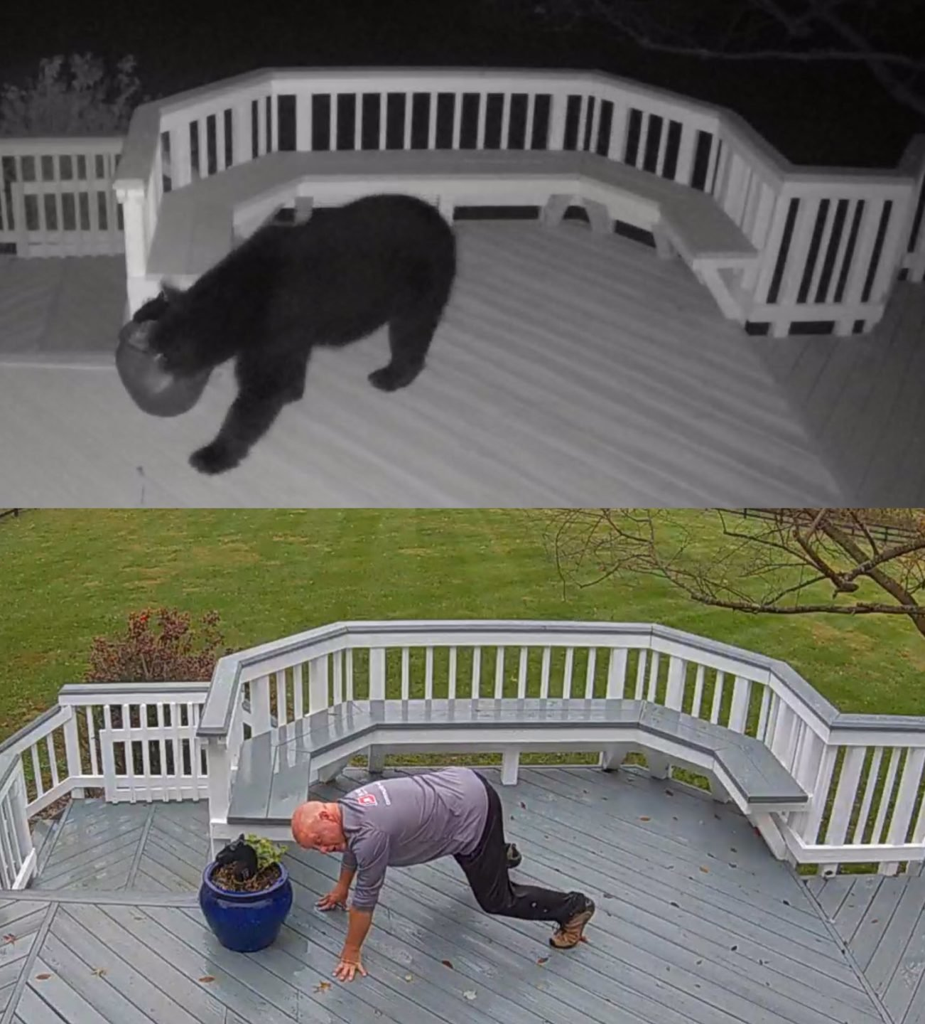 Comparison of Black Bear to Homeowner