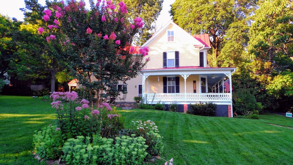 Pink Crepe Myrtle in Bloom at 18339 Railroad Street in the Village of Bluemont