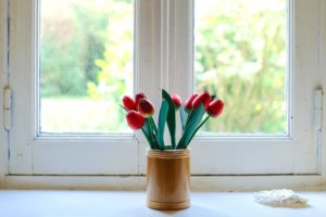 red tulips in the window