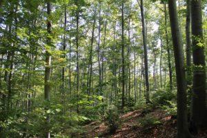 sloped hillside in the woods