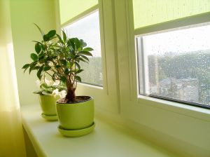 Tips for a Healthy Home