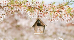 Tree in bloom with bird house